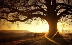 восход, дерево, солнце