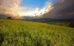 поле, небо, солнце, обоя