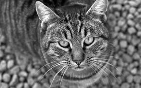 Koshak, view, black and white