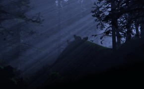 fort, Loups, lumire, nuit