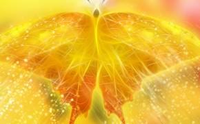 蝴蝶, 黄