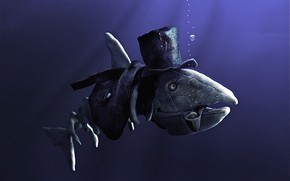 pesce, Bambini, umorismo