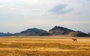 cavallo, Hills, steppa