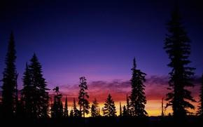 日落, 树, 天空