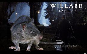 Willard, Willard, film, movies
