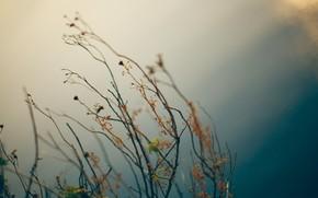 natureza, Plantas, macro, secar, Ervas, foto, cor, quadro, imagem, papel de parede