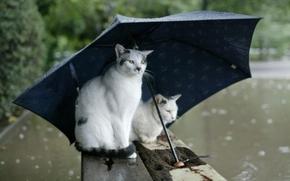 осень, дождь, зонт